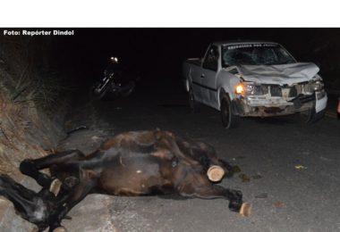 Acidente em Coronel Murta, entre uma Saveiro e um Cavalo Preto, após uma Curva de Noite. O Cavalo Morreu o Motorista saiu Ileso